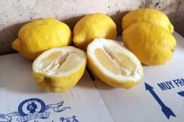 Limones para crear perfumes de la marca Hierbas de Ibiza