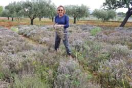 Recogiendo flores para creación de perfumes para hierbas de Ibiza